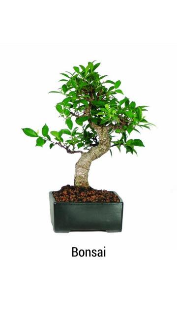 Bonsai Giveaway